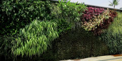 What is a Living Wall & How Can It Beautify Your Business?, Ewa, Hawaii