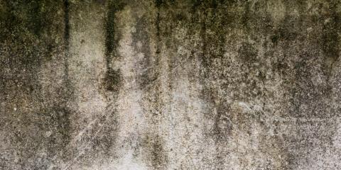 3 Reasons You Should Let the Professionals Handle Mold Remediation, Wailuku, Hawaii