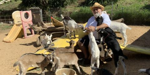 Save Surfing Goat Dairy With the Goat Fund Me Program!, ,