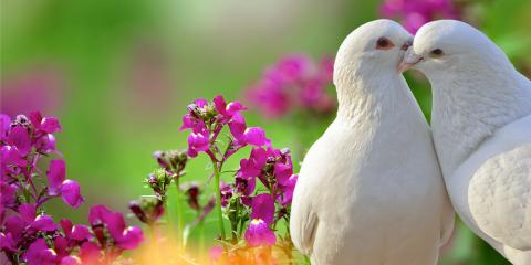 What You Need to Know About White Doves, Covington, Kentucky