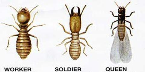 Lexington's Residential Pest Control Experts Offer Information on Controlling Termites in Winter, Lexington-Fayette, Kentucky
