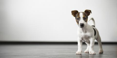 3 Pest Control Tips for Homeowners With Pets, Cincinnati, Ohio
