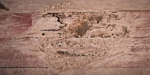 Begin Termite Control & Be Ready for Swarms This Spring, Hebron, Kentucky
