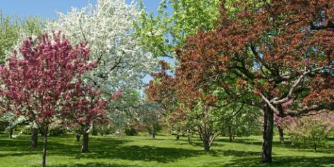 3 Springtime Tree Maintenance Tips, Florence, Kentucky