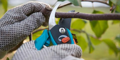 3 Reasons You Should Hire a Professional Tree Pruning Service, Florence, Kentucky