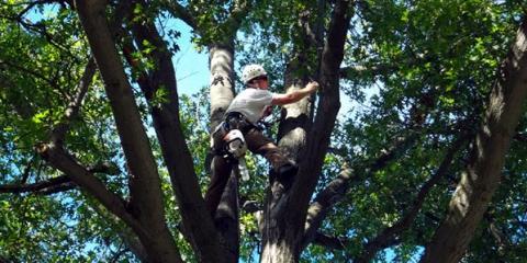 L & M Tree Service, Tree Removal, Services, Kalispell, Montana