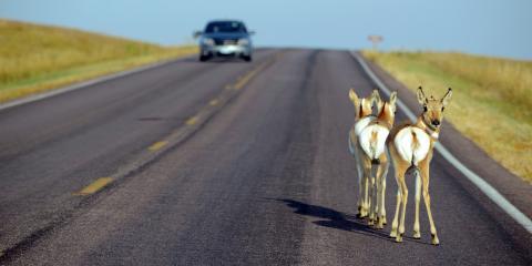 How to Avoid Deer Collisions, La Crosse, Wisconsin