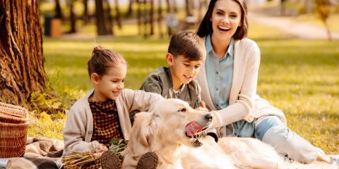 What Happens to Your Pets After a Divorce?, La Crosse, Wisconsin