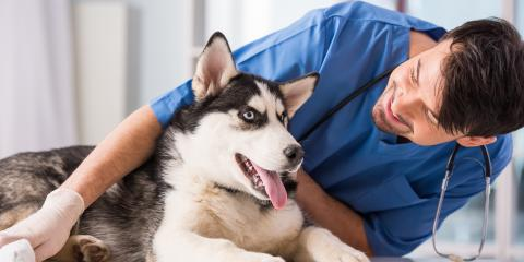 4 FAQ About Spaying or Neutering Your Dog, Shelby, Wisconsin