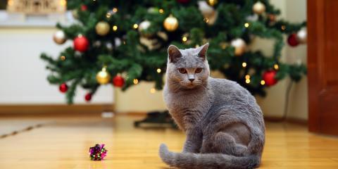 How Do I Cat-Proof My Christmas Tree?, Shelby, Wisconsin