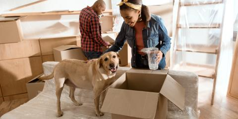 Why Your Dog May Experience House-Training Regression After a Move, La Crosse, Wisconsin