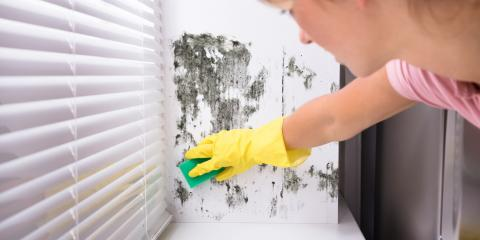 What You Should Know About Black Mold, La Crosse, Wisconsin