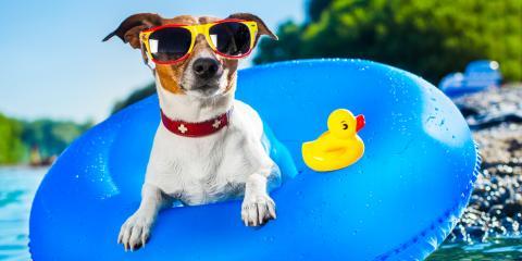 Summer Dog Grooming: 3 Dos & Don'ts, Onalaska, Wisconsin