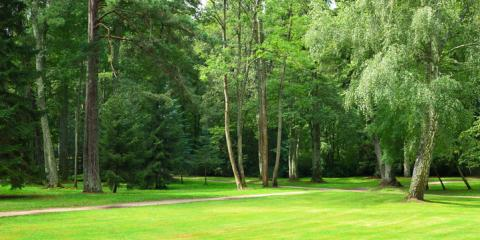 How a Professional Tree Service Will Transform Your Outdoor View, La Crosse, Wisconsin