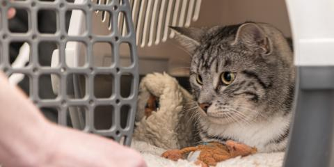 What to Know About Cats & Carriers, Shelby, Wisconsin