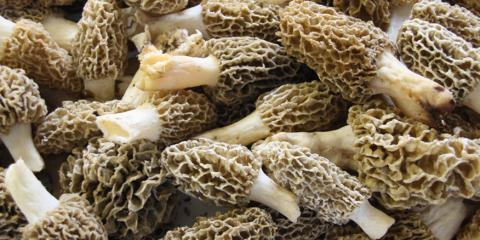 3 Steps for Properly Cooking Morel Mushrooms, Eitzen, Minnesota