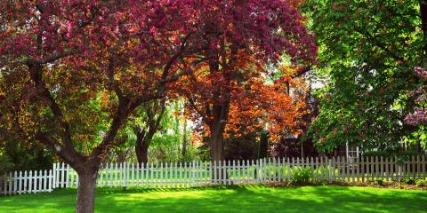 Maintain a Beautiful Yard This Summer With Professional Tree Service , La Crosse, Wisconsin