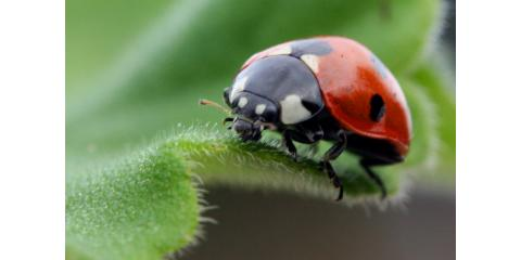 5 Crucial Pest Control Tips to Be Aware of This Spring!, Lexington-Fayette, Kentucky