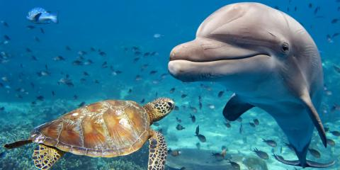 7 Fun Facts About Dolphins, Lahaina, Hawaii