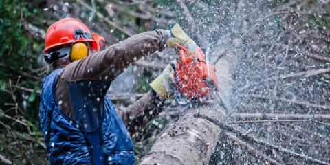 A Guide to Tree Pruning & Trimming, De Motte, Indiana