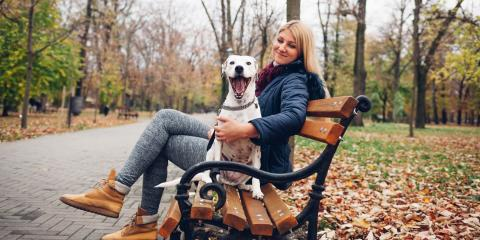 What Happens to Pets in a Divorce?, Lake St. Louis, Missouri