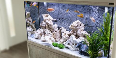 5 Tips for Moving a Fish Tank to Your New Home, Lakeville, Minnesota