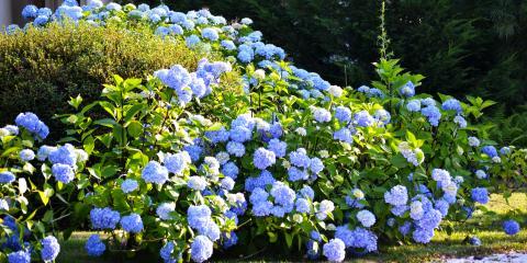 3 Tips for Caring for Bushes & Shrubs, Lancaster, South Carolina