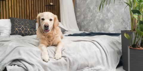 What to Know About Leptospirosis in Dogs, Lincoln, Nebraska