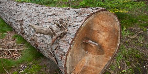 5 Signs You Need Tree Removal, Shawnee, Missouri
