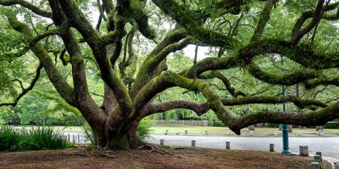 Land Surveying Company Explains Tree Surveys, Monroe, New York