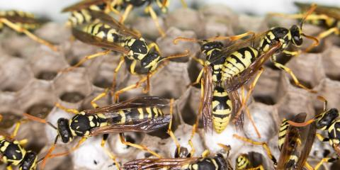 The 3 Most Dangerous Types of Pest Management Problems, Roxbury, New Jersey