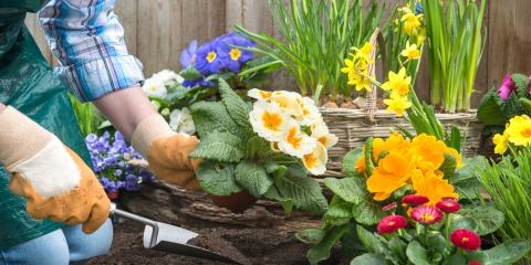 How to Decide Between Annuals & Perennials This Spring, Hamilton, Ohio