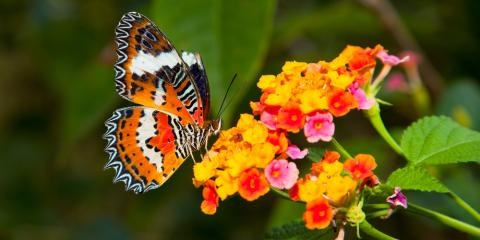 What You Need to Know About Starting a Butterfly Garden, Missouri, Missouri