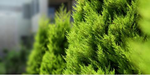 5 Landscape Design Tips for a Lively Winter Yard, Enterprise, Alabama