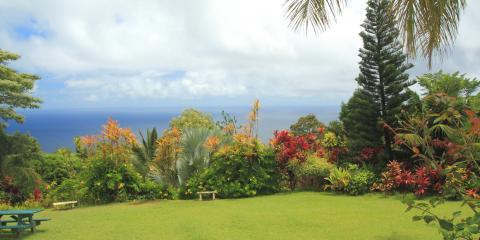 3 Native Hawaii Plants for Your Landscape , Honolulu, Hawaii