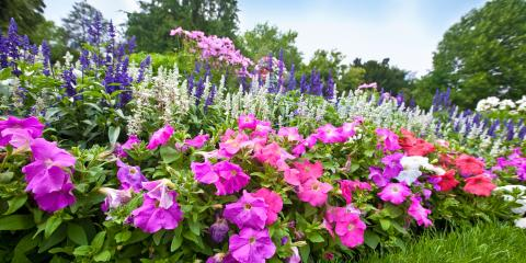 What's the Difference Between Annual & Perennial Flowers?, Sagamore Hills, Ohio