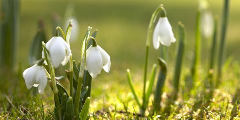 4 Common Plants for Your Winter Garden, Hamilton, Ohio