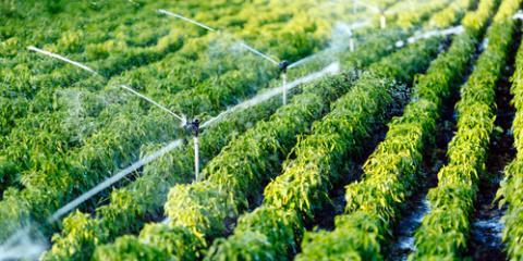 3 Watering Tips to Help Avoid Plant & Crop Burn, Ewa, Hawaii