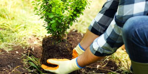 Edwardsville Landscape Experts Share 3 Types of Trees to Plant This Spring, Wood River, Illinois