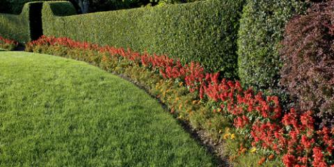 Landscape Design Experts Share 5 Tips for Maintaining Your Yard, Hanover, Ohio