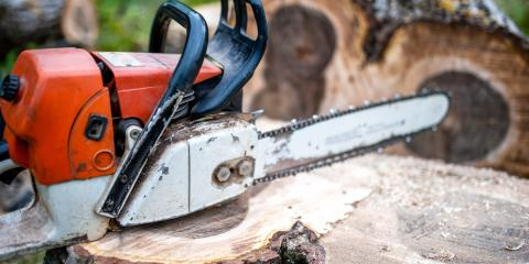 3 Reasons to Remove a Tree Stump from Your Yard , Honolulu, Hawaii