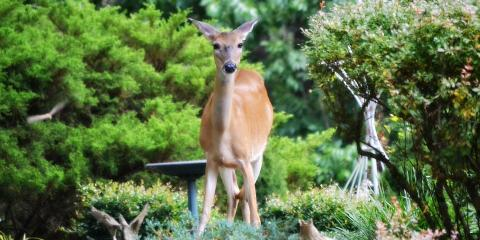 3 Pro Landscaper Tips to Keep Animals Out of Your Garden, Covington, Kentucky