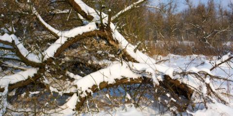 What Are the Signs of Winter Tree & Shrub Damage, Ham Lake, Minnesota