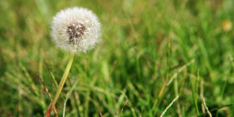 A Gardener's Guide to Weed Prevention, Danley, Arkansas