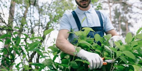 Do's and Don'ts of Proper Shrub Pruning, ,