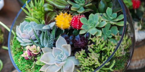 3 Modern Beach Home Landscaping Ideas, Ewa, Hawaii