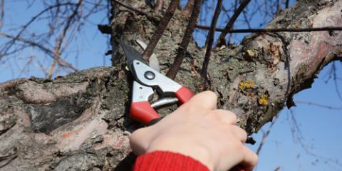 A Garden Store Explains Dormant Pruning, Fairfield, Ohio