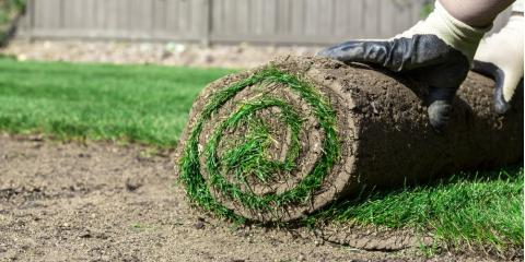 When Should You Lay Sod This Year?, Lancaster, South Carolina