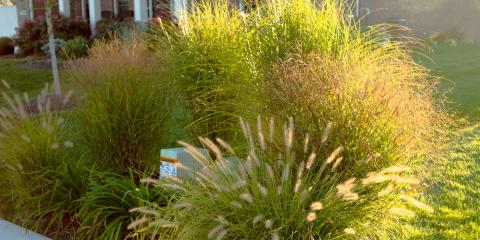 5 Nonflowering Plants for Your Landscape, Nicholasville, Kentucky