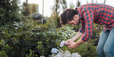 How Early in the Year Should You Start Your Landscaping?, St. Peters, Missouri